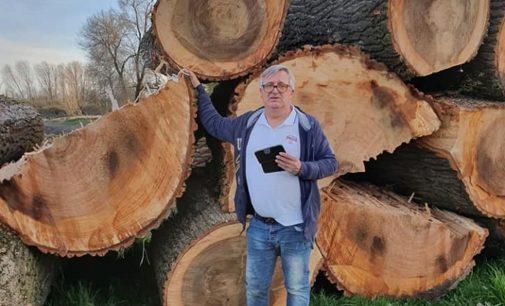 PAVIA E PROVINCIA 19/03/2020: Scempio di alberi a Villanterio. Abbattuti fusti secolari lungo 3km di sponda del Lambro. Distrutto l'habitat anche di molta fauna