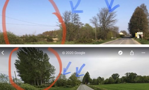 PAVIA GIUSSAGO 15/04/2020: Abbattuti altri alberi lungo i corsi d'acqua. Non si ferma la sparizione della flora selvatica presente nella campagna della provincia di Pavia