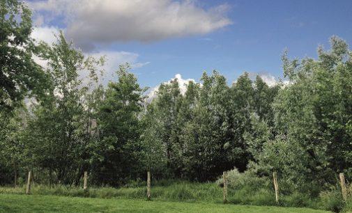 PAVIA 27/05/2020: Nuovi alberi. Anche in provincia il progetto di forestazione