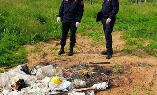CASORATE PRIMO 23/05/2020: Vìola i diventi anti Covid. Pesantemente sanzionato un agricoltore