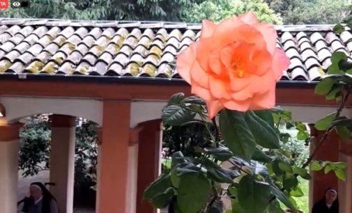 VOGHERA 20/05/2020: Festa di Santa Rita alle Agostiniane. Venerdì 22 la diretta web della Messa e della benedizione delle Rose