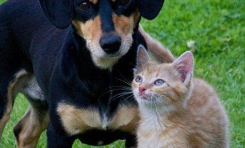"""VOGHERA 01/06/2020: Contro l'abbandono degli animali. Nuova campagna """"Social Mission"""" di Asm"""
