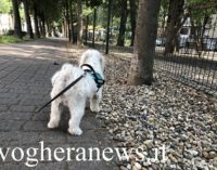 PAVIA VOGHERA 22/06/2020: Animali. Come scegliere il miglior cibo per cani di piccola taglia