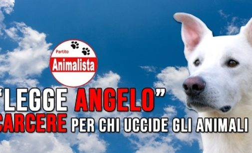 PAVIA VOGHERA 17/06/2020: Cane torturato e ucciso. Il Partito Animalista propone il carcere per chi maltratta e uccide gli animali