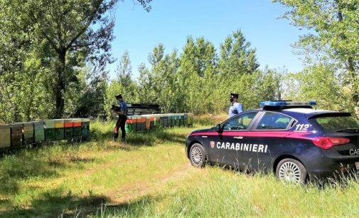 VOGHERA 16/06/2020: Furti di alveari in Oltrepo. Carabinieri sgominano banda. Denunciate quattro persone