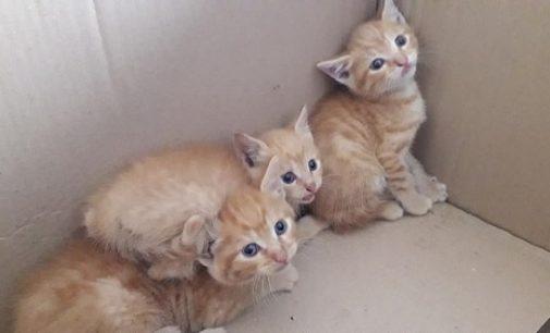 """VOGHERA 09/06/2020: """"Sos cibo gatti"""" al rifugio dell'Enpa"""