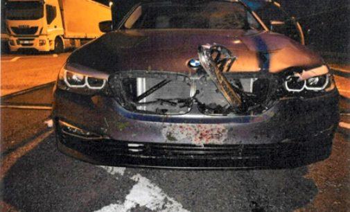 RIVANAZZANO 28/07/2020: Oltrepadano si scontra con un cerbiatto sulla A1. Illeso per miracolo ma tanti danni all'auto