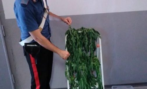 MEDE 03/08/2020: Coltiva piante di Marijuana nella camera da letto. 55enne arrestato dai Carabinieri