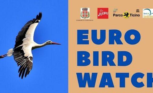 """GARLASCO 30/09/2020: Euro Bird Watching. Domenica tutti a """"caccia"""" di uccelli migratori con gli esperti della LIPU"""