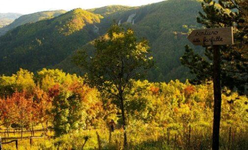 OLTREPO 15/10/2020: Natura. Nel week end due escursioni sui monti dell'Oltrepo a caccia di Alberi colorati e formiche Rufa