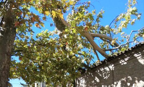 VOGHERA PROVINCIA 03/10/2020: Maltempo. Danni anche in città a causa del vento. La Lomellina è la più colpita per lo straripamento del Sesia
