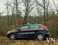 ROCCA DE' GIORGI 22/12/2020: Alberi tagliati troppo in un bosco. Maximulta dei Carabinieri Forestali ad una ditta