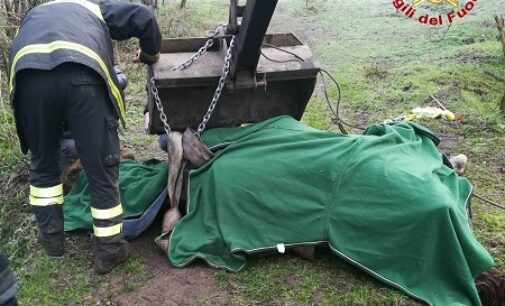 PAVIA 11/01/2021: Cavallo cade in un canale. Lo salvano i vigili del fuoco