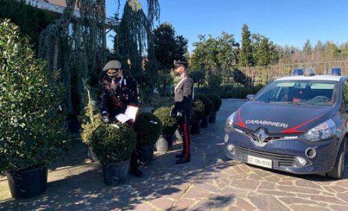 BOSNASCO 16/02/2021: Rubava piante dal vivaio. Arrestato 52enne