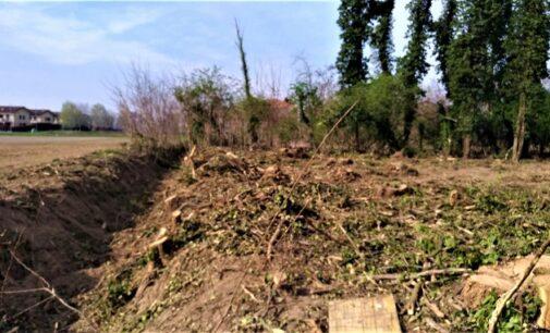 PAVIA OLTREPO 29/03/2021: Natura. Non si fermano in provincia i tagli degli alberi selvatici. E nemmeno le potature estreme dei fusti. Gli ultimi casi