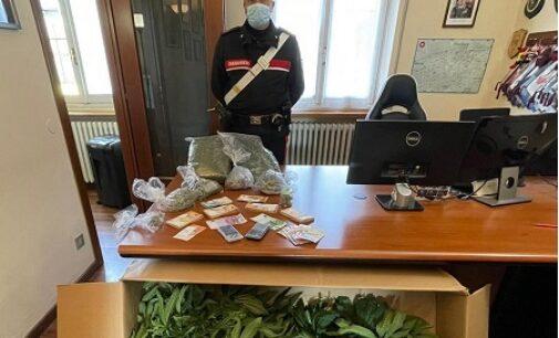 PIETRA DE' GIORGI PORTALBERA 12/03/2021: Fermato per un controllo i carabinieri gli trovano 1 kg di marijuana
