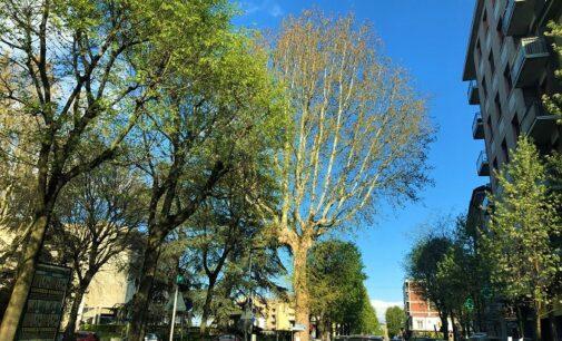 VOGHERA 07/04/2021: Verde in città. Il Comune: faremo il censimento degli alberi. Interventi nei giardini e nei parchi gioco. In futuro più ditte al lavoro in città