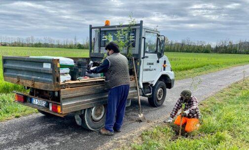 """CODEVILLA 17/04/2021: La Greenway Voghera-Varzi sempre più """"green"""" grazie agli alberi piantati dal Comune"""