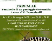VOGHERA 12/05/2021: Le Farfalle. Specie messa in pericolo da pesticidi e taglio di siepi e alberi. Una mostra alla Pagano