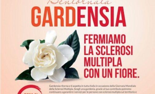 """PROVINCIA 07/05/2021: Contro la Sclerosi Multipla. C'è la raccolta fondi """"Bentornata Gardensia"""" per aiutare la ricerca"""