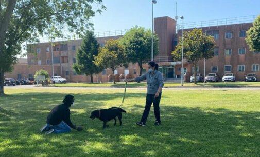 """PAVIA 04/06/2021: Cani """"vogheresi"""" al carcere di Pavia per aiutare i detenuti nel percorso riabilitativo"""
