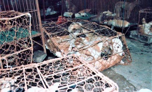 VOGHERA 27/06/2021: Festival della carne di cane. La protesta della parlamentare vogherese Lucchini