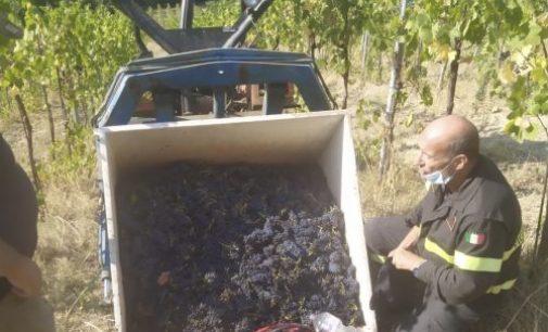 BORGO PRIOLO 01/09/2021: Si rovescia il carico durante la vendemmia in collina. Ferito un 32enne