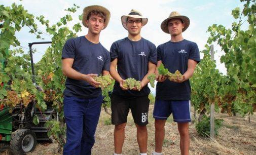 CODEVILLA 23/09/2021: Studenti e detenuti insieme nelle vigne per un progetto di inclusione sociale. Produrranno anche un nuovo vino