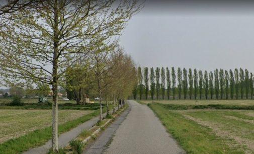 SAN MARTINO 02/09/2021: Le loro radici rovinano l'asfalto della pista ciclabile. Per questo saranno abbattuti oltre 90 platani