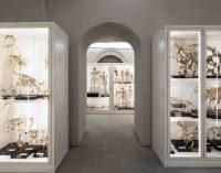 PAVIA 24/09/2021: Spettacolo al Museo di Storia Naturale dell'Università. Da domenica Kosmos apre i suoi depositi al pubblico. In visione 3.000 reperti rideterminati, catalogati e restaurati